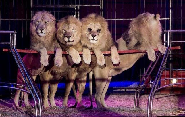 Los circos con animales, un espectáculo del pasado
