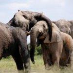 Un juez de Estados Unidos desestima una petición de habeas corpus a tres elefantas